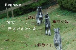 c0126699_1735325.jpg
