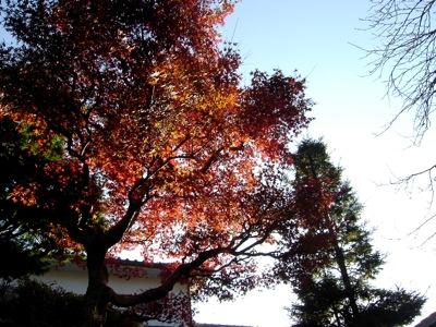 秋の恵みに感謝_e0115301_20495420.jpg