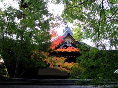 黄葉の御霊神社_e0048413_2055152.jpg