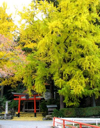 黄葉もさかり 岩戸落葉神社_e0048413_22555450.jpg
