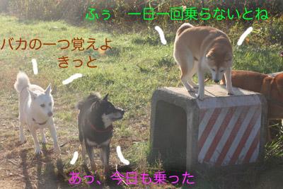 c0166018_0512472.jpg