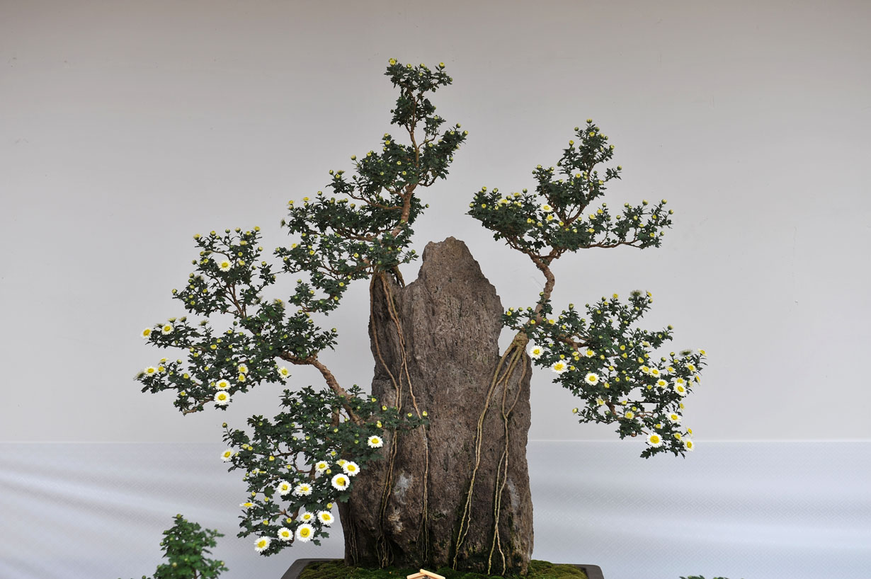 太宰府天満宮の菊盆栽 壁紙写真_f0172619_9584461.jpg