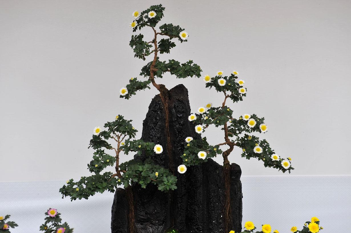 太宰府天満宮の菊盆栽 壁紙写真_f0172619_9593268.jpg
