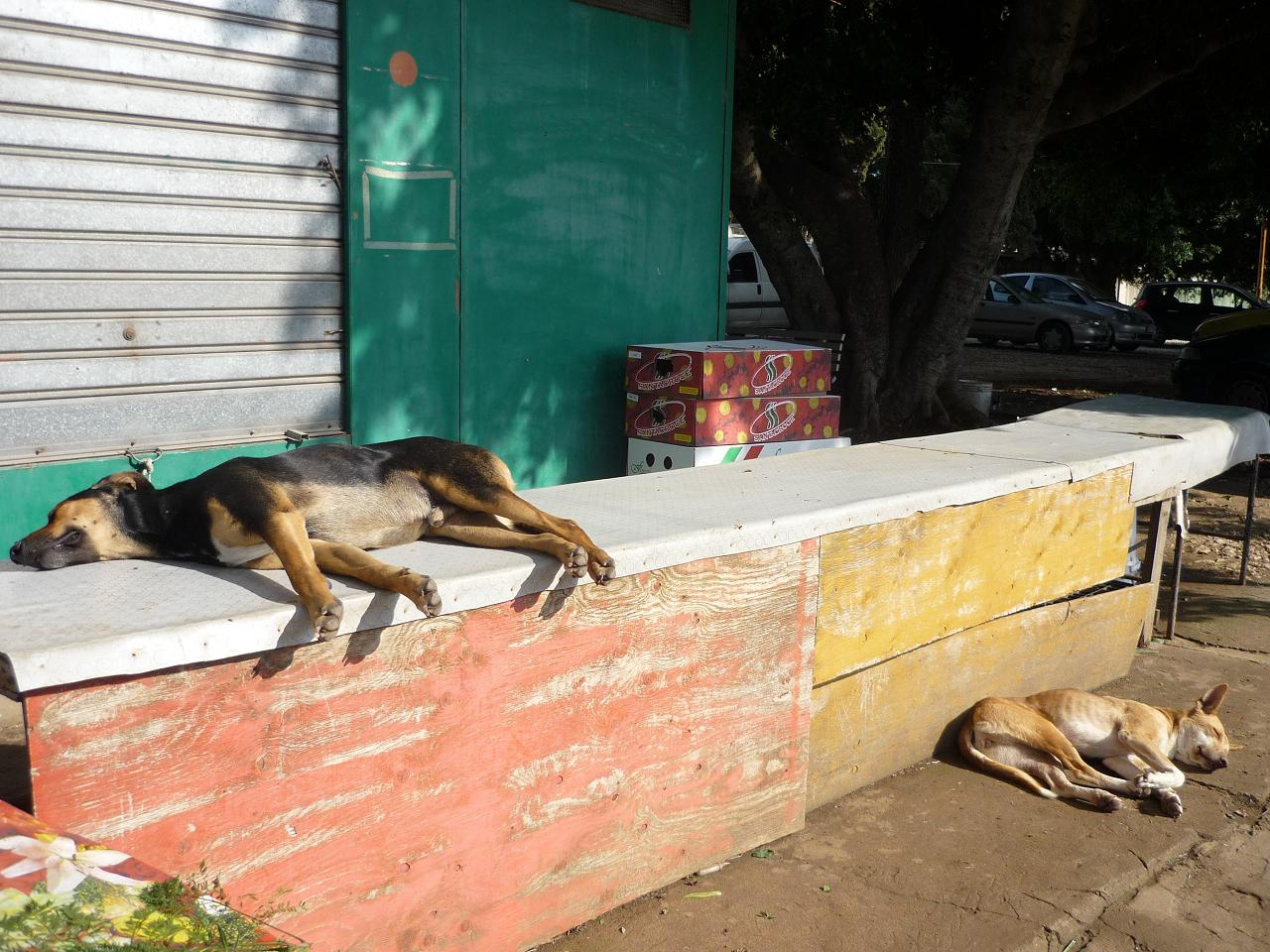 そして犬の話 バゥ_d0084229_23515260.jpg
