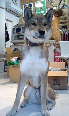 Jameson-kun_c0151934_1334997.jpg