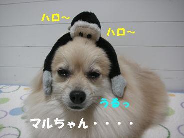 c0179136_19551288.jpg