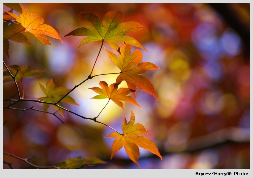 鮮やか彩色_e0063851_19102641.jpg