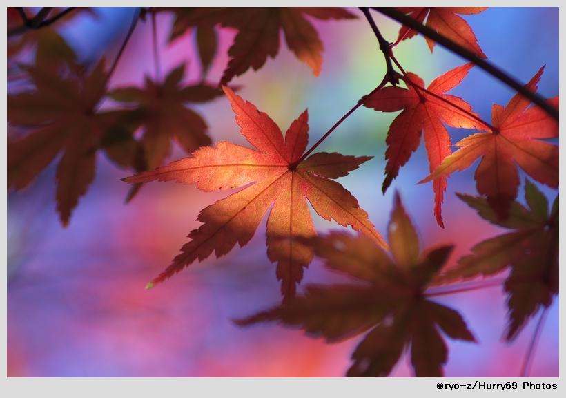 鮮やか彩色_e0063851_19104032.jpg