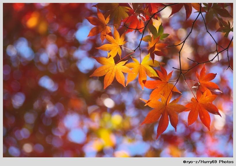 鮮やか彩色_e0063851_1911686.jpg