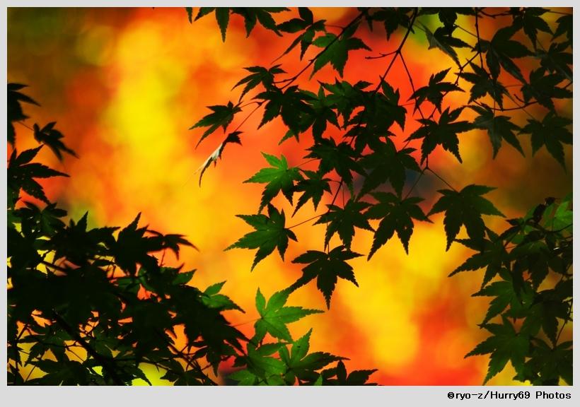 鮮やか彩色_e0063851_19122919.jpg