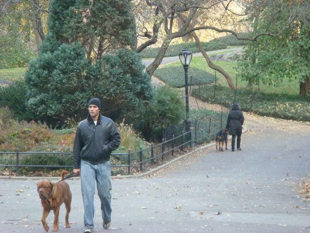 セントラルパークの寒中散歩、8:00AM_d0100880_23151422.jpg