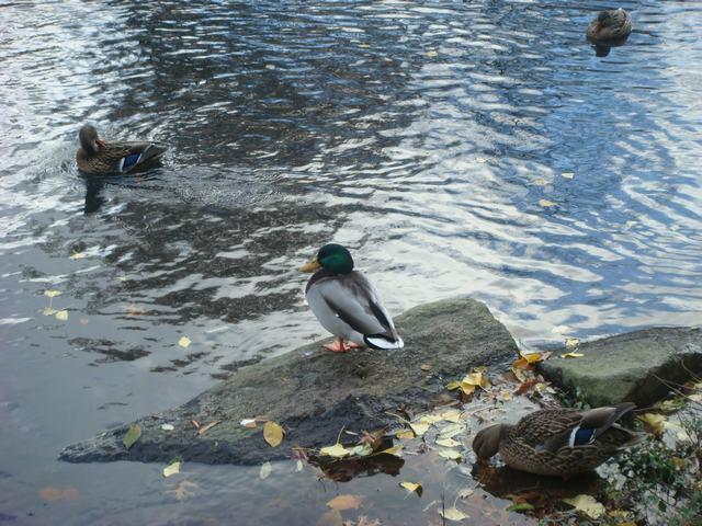 セントラルパークの寒中散歩、8:00AM_d0100880_23194394.jpg
