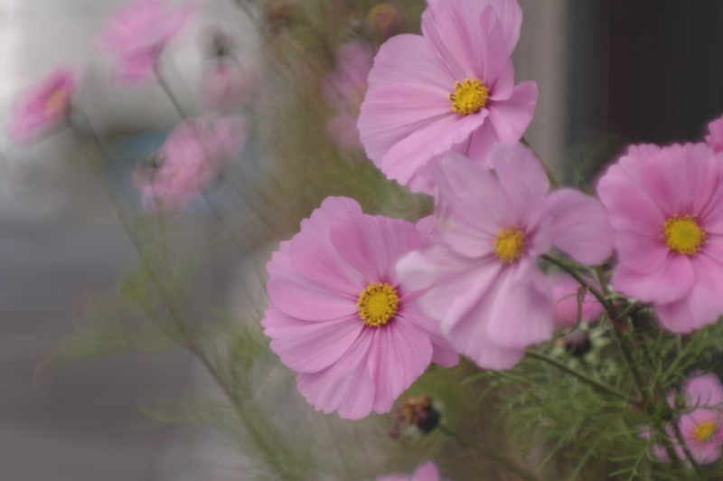 函館、路傍の花々_f0042194_22164310.jpg
