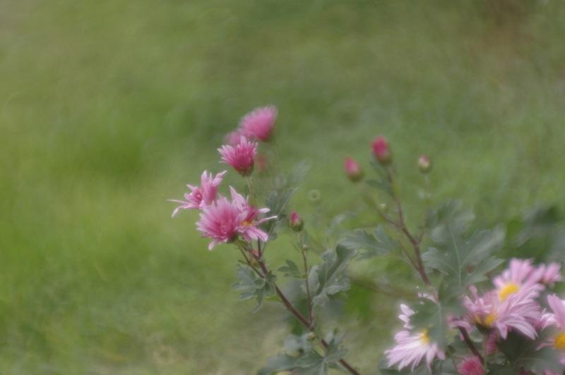 函館、路傍の花々_f0042194_22174238.jpg