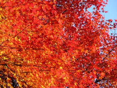 紅葉を訪ねて 宗蓮寺_e0048413_21272054.jpg