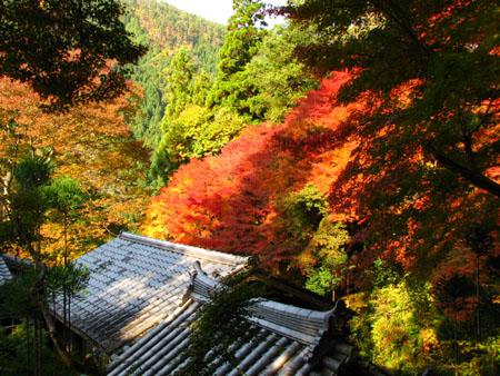 紅葉を訪ねて 宗蓮寺_e0048413_21273610.jpg