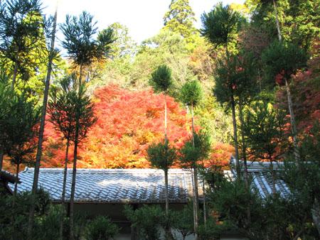紅葉を訪ねて 宗蓮寺_e0048413_21274971.jpg