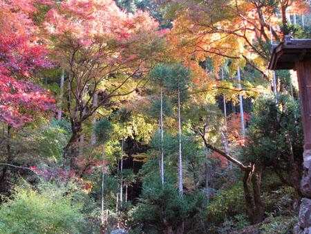 紅葉を訪ねて 宗蓮寺_e0048413_2127592.jpg
