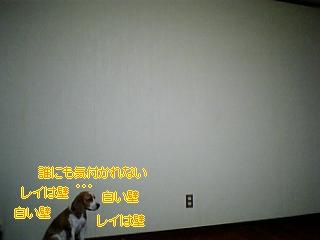 f0148927_2054553.jpg