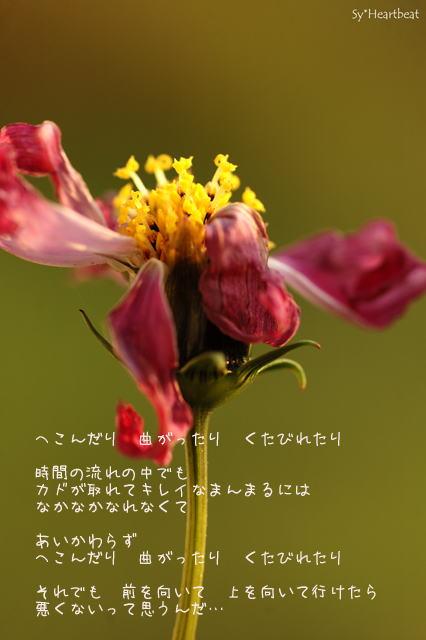 c0144353_13344597.jpg
