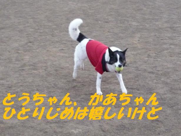 a0104464_11443948.jpg