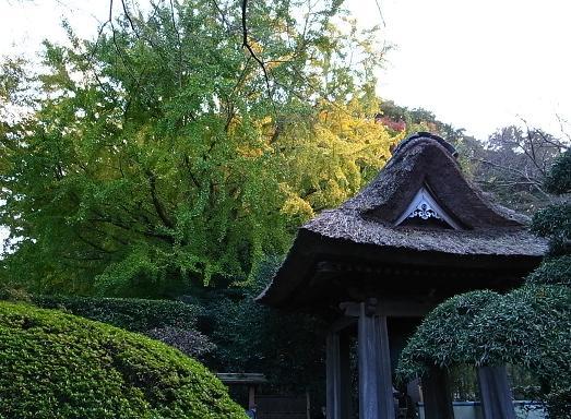 鎌倉 4_c0151965_23501861.jpg