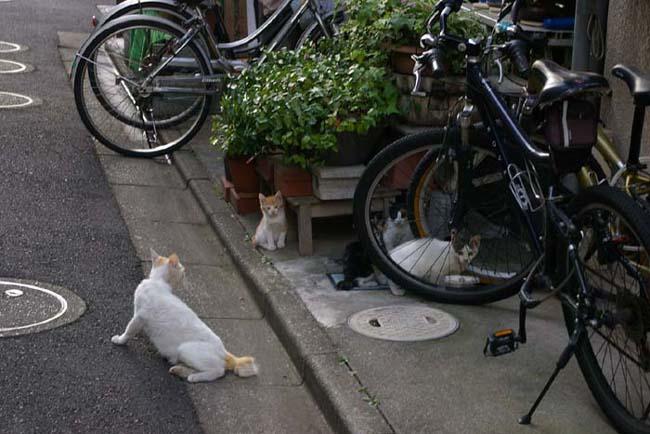 下町の路地と野良猫_f0130879_2354492.jpg