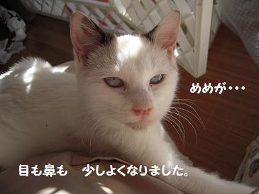 c0139488_15451053.jpg