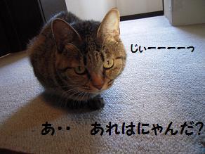 c0139488_1555388.jpg