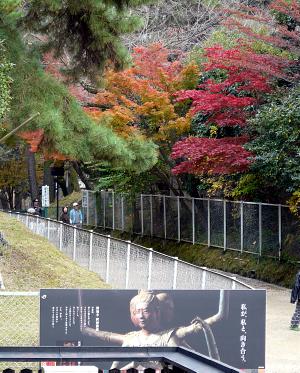 興福寺の紅葉_b0008289_21463590.jpg