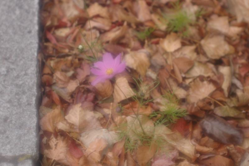 函館、路傍の花々_f0042194_0222349.jpg