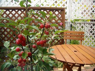 お庭が出来る過程・・・♪_f0181000_12211553.jpg