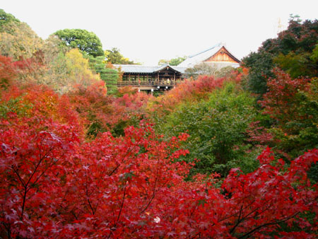 紅葉の盛り 東福寺_e0048413_22472981.jpg