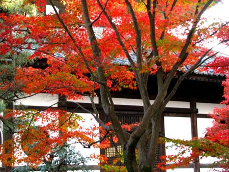 紅葉の盛り 東福寺_e0048413_22482677.jpg