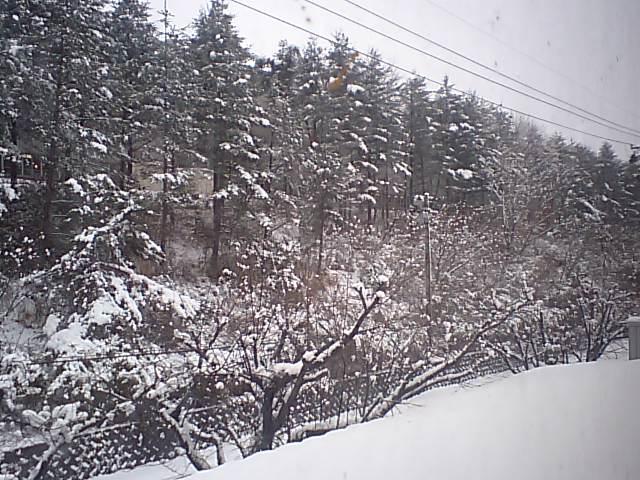 雪です(早!)_e0012815_10243170.jpg