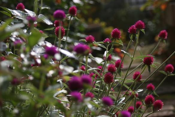 庭の花たち_d0150720_953465.jpg
