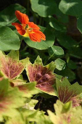 庭の花たち_d0150720_961027.jpg