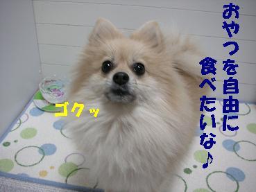 c0179136_2344326.jpg