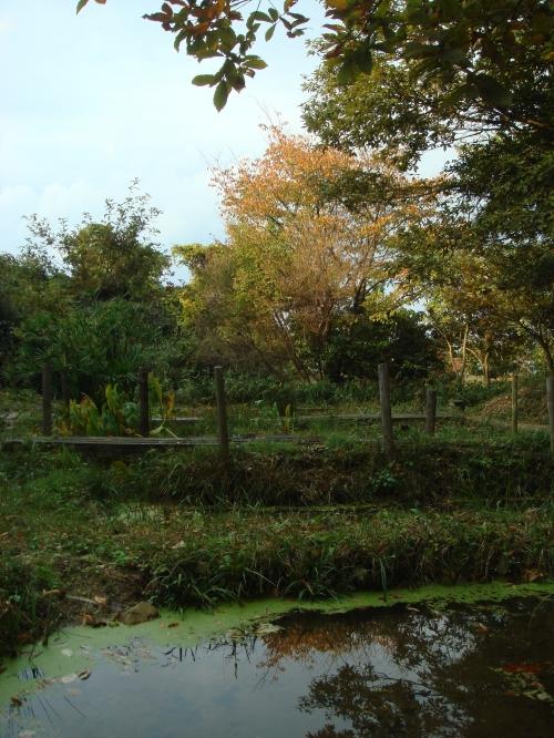 雨後のうみべの森_c0108460_1732010.jpg