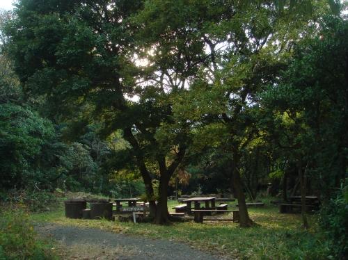 雨後のうみべの森_c0108460_17333425.jpg