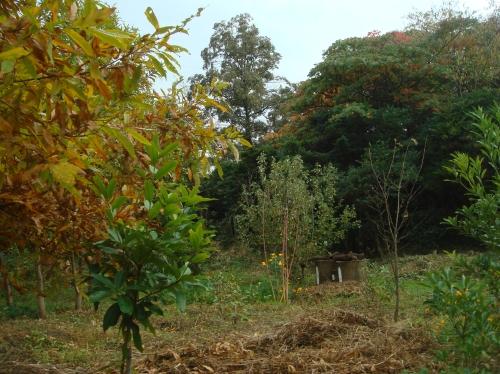 雨後のうみべの森_c0108460_1734355.jpg