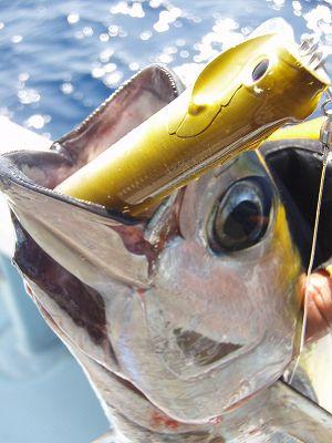 釣行写真集 『夏だ沖縄』 編_a0097491_16532437.jpg