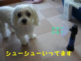 f0145192_1665947.jpg