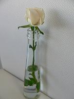 e0160494_14221447.jpg