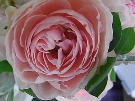 ピンクのバラ_b0105897_264385.jpg