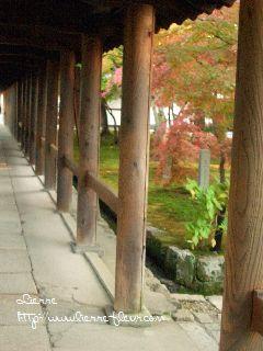 秋 京都 その1_e0127625_9193794.jpg
