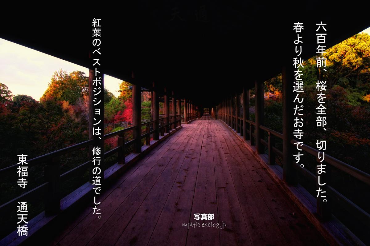 そうだ 京都、行こう。_f0021869_20304544.jpg