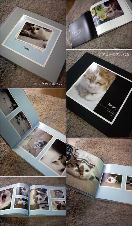 猫アルバム_e0158970_2273061.jpg