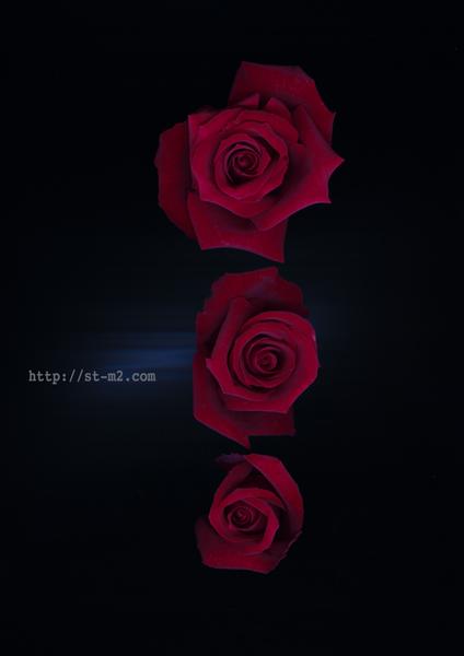 赤い薔薇_a0002672_17342669.jpg