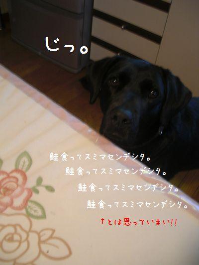 b0000885_16522036.jpg